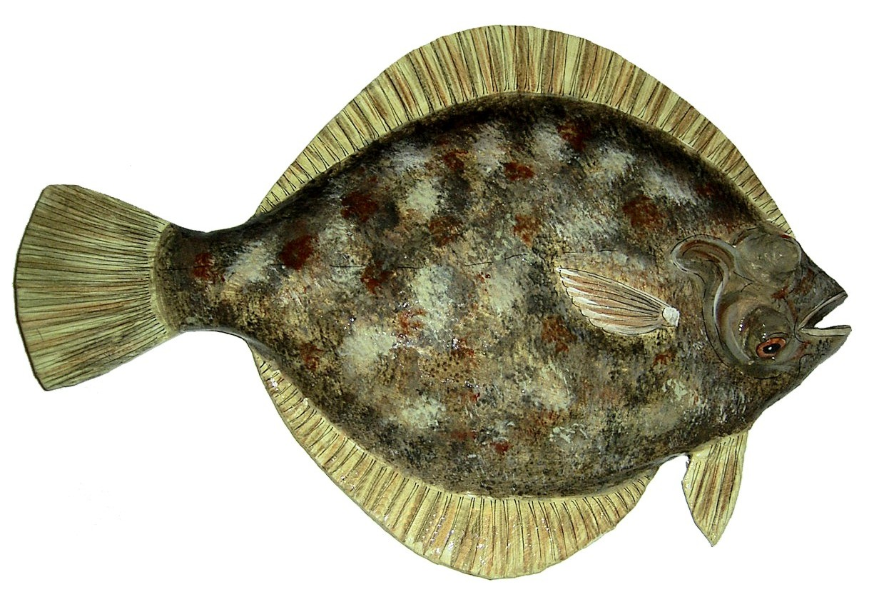 Papier mach fish photo gallery for Picture of a flounder fish