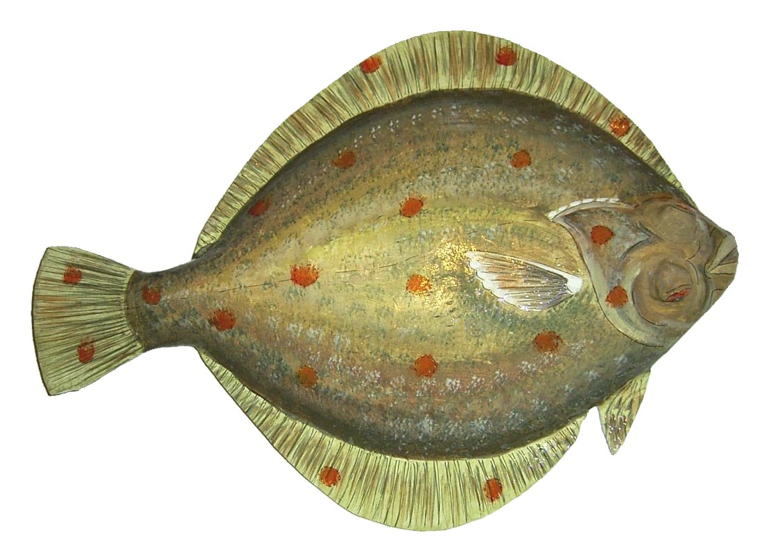 Plaice Definition What Is